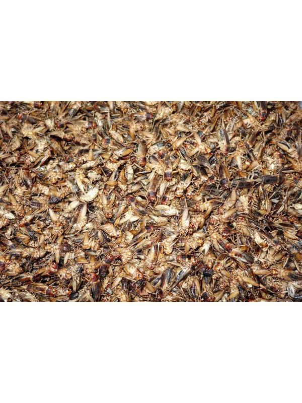 Cricket Powder Gryllus assimilis