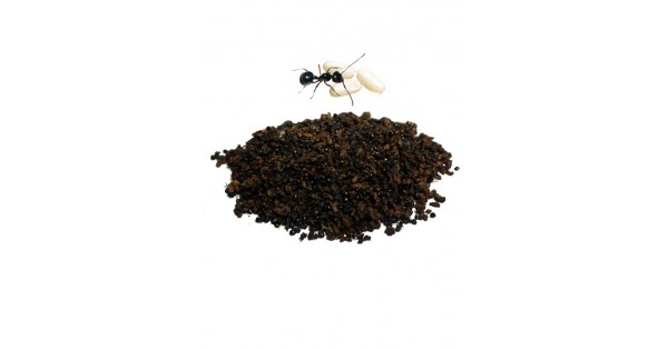 Dehydrated Black Ant Eggs