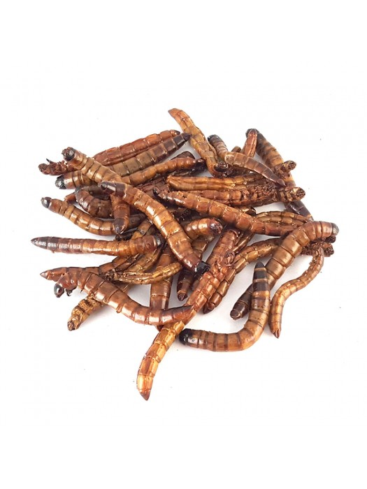 Dehydrated Superworms
