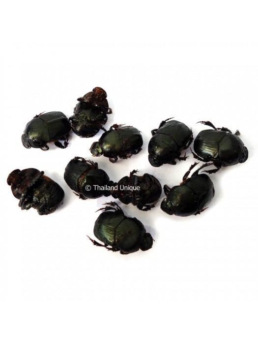 Dehydrated dung beetles