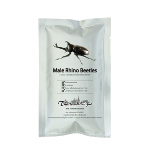Edible Male Rhino Beetles