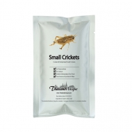 Farmed Edible Crickets - Acheta domestica Sp