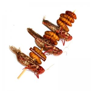 Silkworm & Grasshopper Bug Kebab
