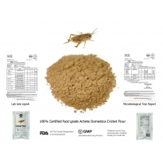 Wholesale acheta domestica cricket flour