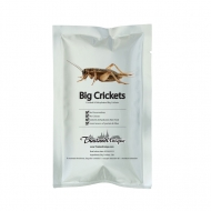 Edible Big Crickets - Gryllus