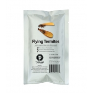 Edible Winged Flying Termites