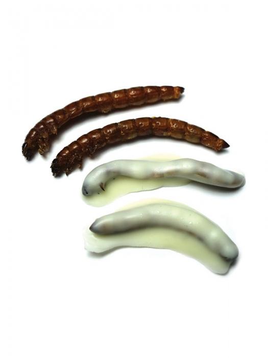 White Chocolate Superworms