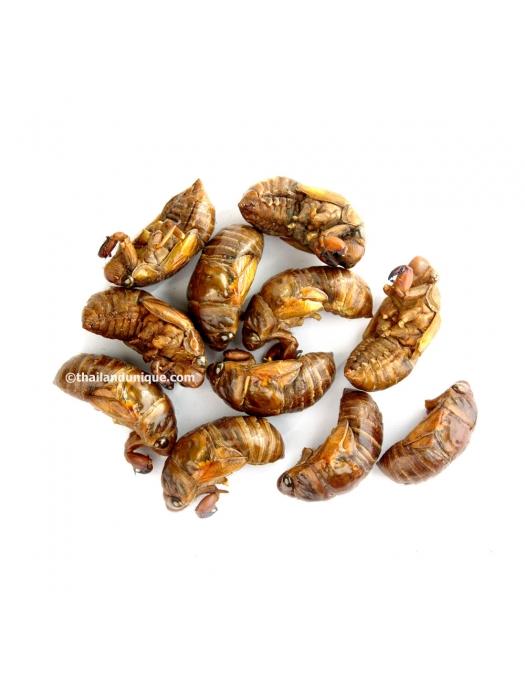 Dehydrated Cicada - Bulk