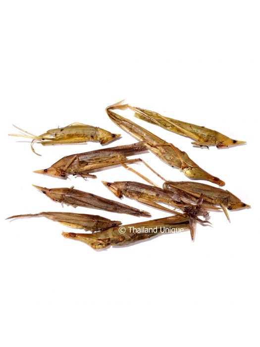 Dehydrated Cone Head Grasshoppers