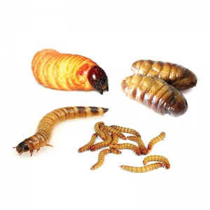 Special Pupae Mix