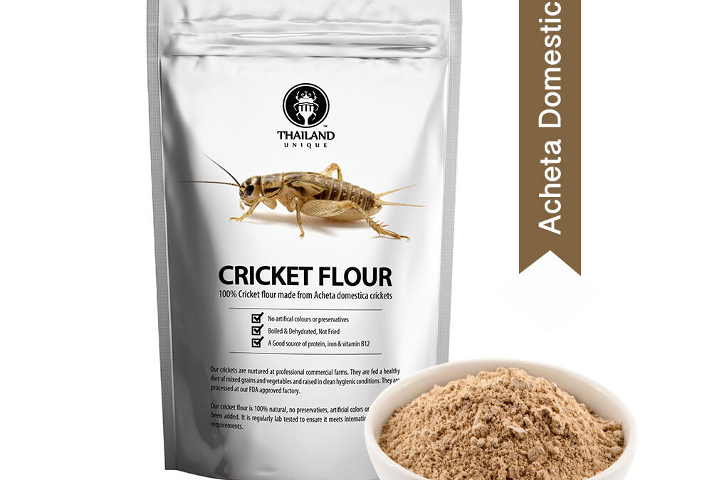 Wholesale cricket powder (flour)