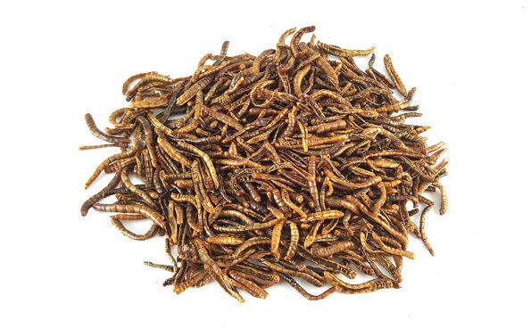 dehydrated mealworms