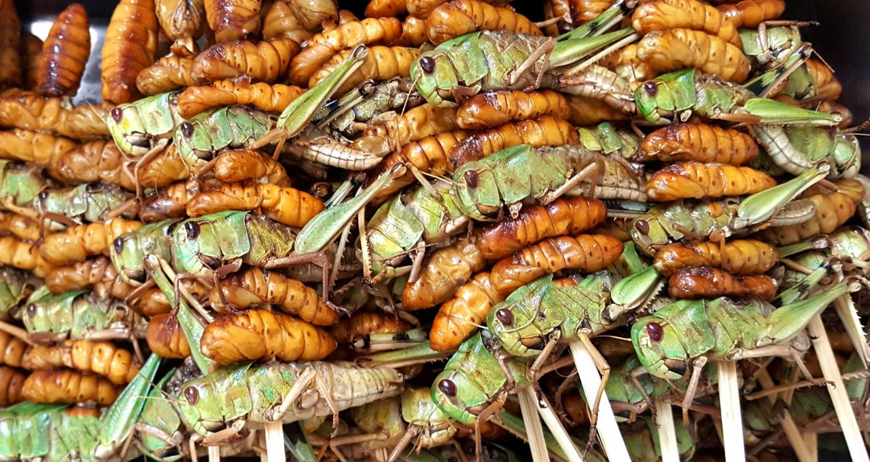 Why TV programs don't always do edible insects justice