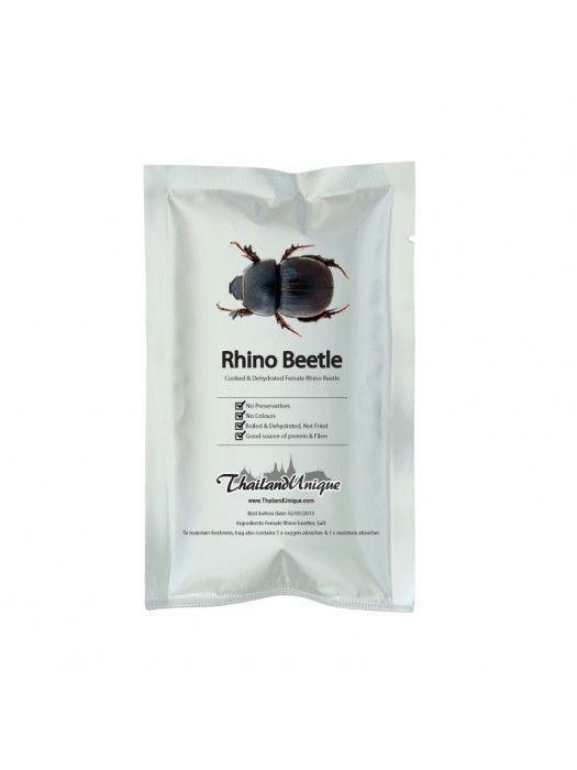 Female Rino Beetles - Hyboschema Contractum