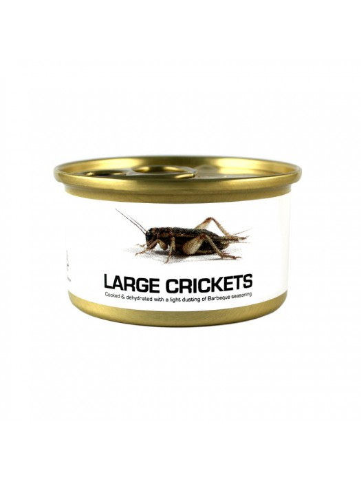 Fried Edible Big Crickets
