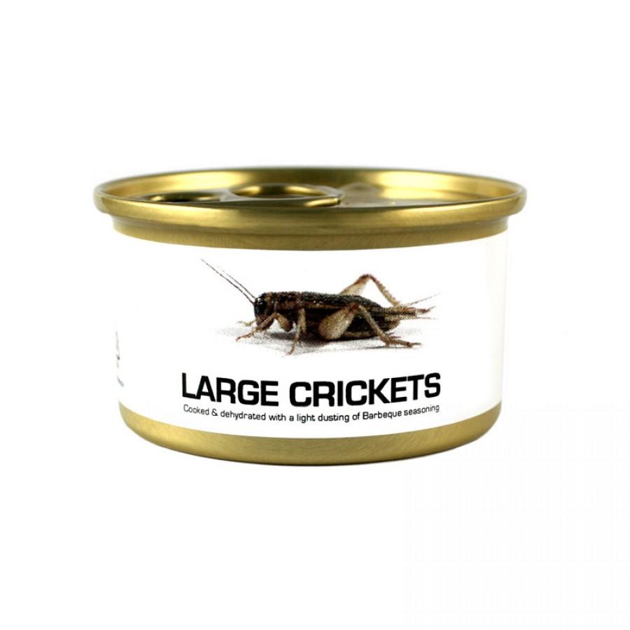 Fried Edible Big Crickets