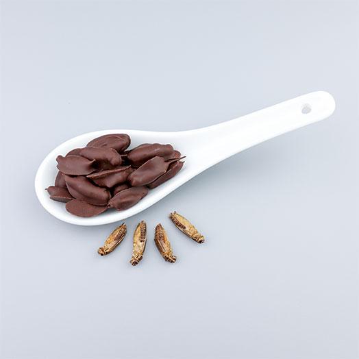 Chocolate Covered Acheta Crickets