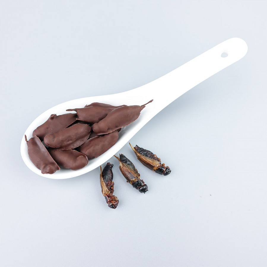 Chocolate Covered Black Crickets