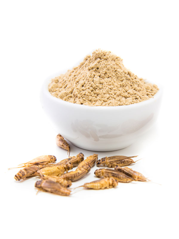 Cricket Powder 100g Acheta Domestica