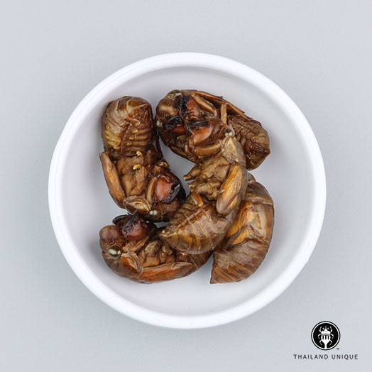 Cicada - Bulk Wholesale