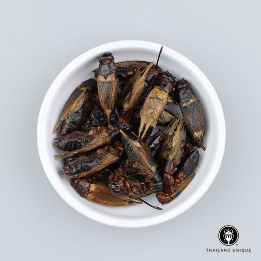 Black Field Crickets Wholesale