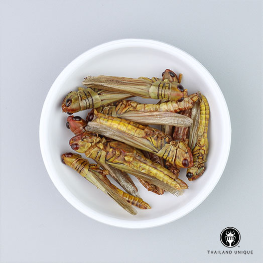 Grasshoppers Wholesale