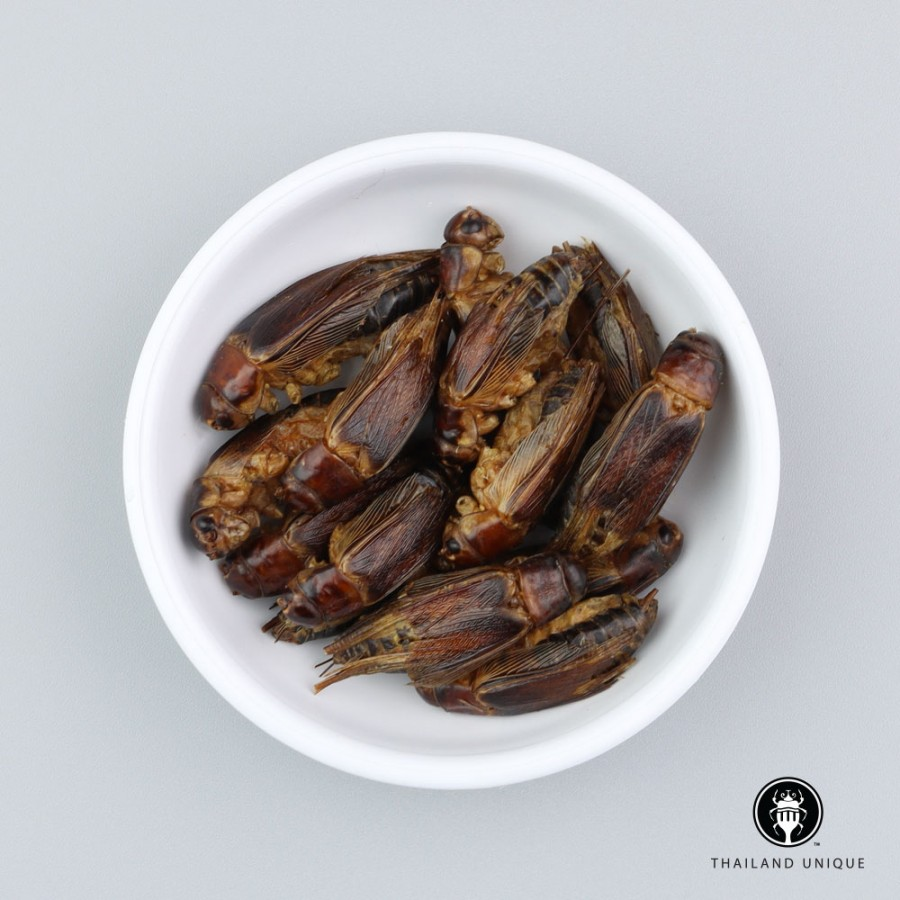 Jamaican Crickets Wholesale