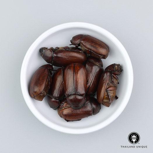 June Beetles Wholesale