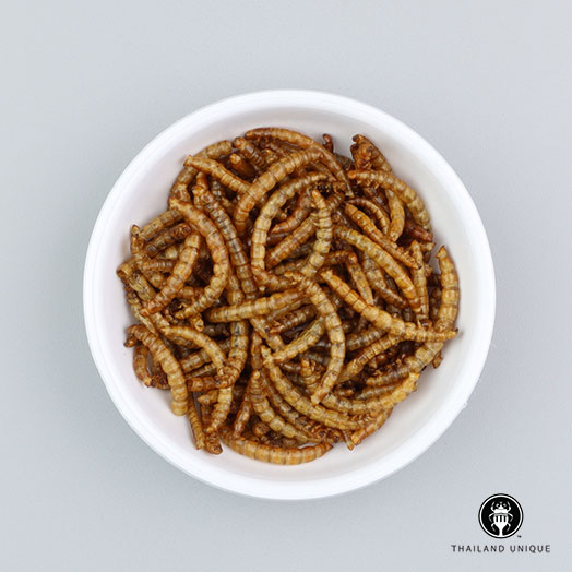 Mealworms Wholesale