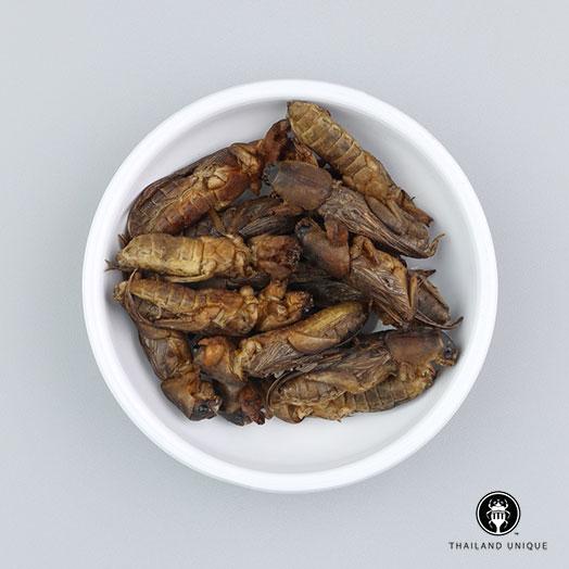Mole Crickets Wholesale