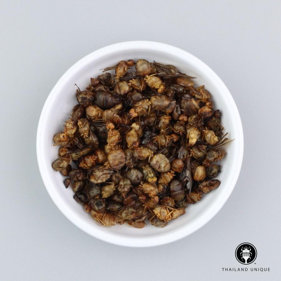 Queen Weaver Ants Wholesale