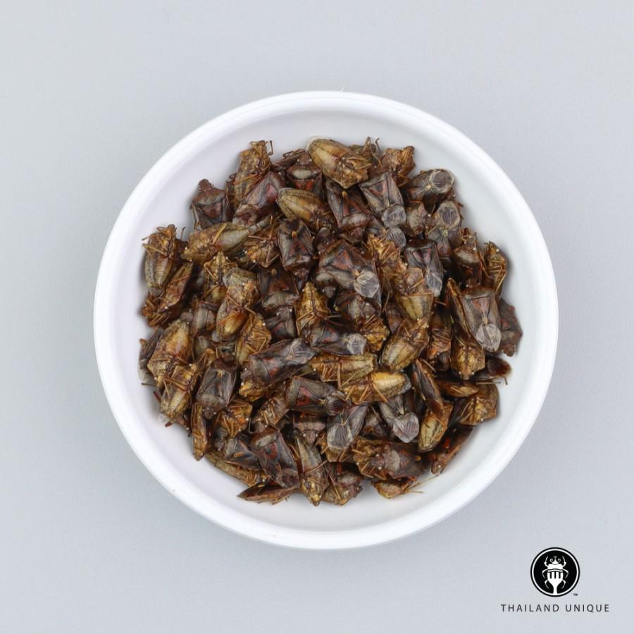 Shield Bugs Wholesale