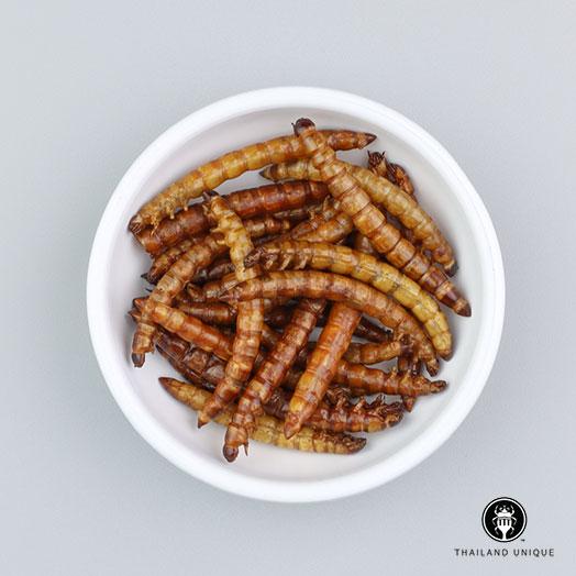 Superworms - Wholesale
