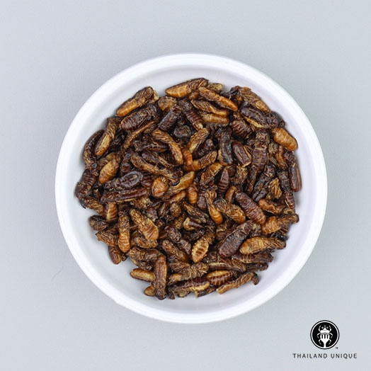 Termite Alates Wholesale
