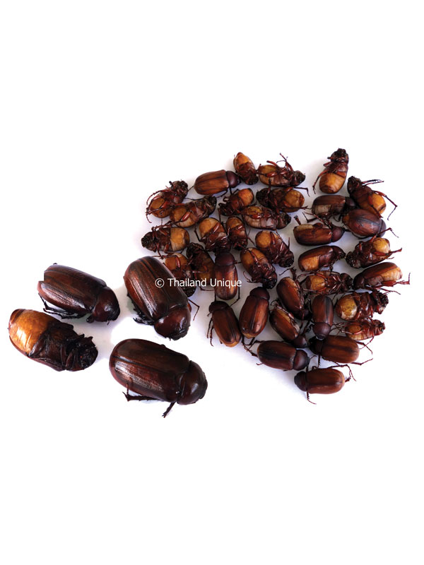 Small Edible June Beetles. Edible June Beetles