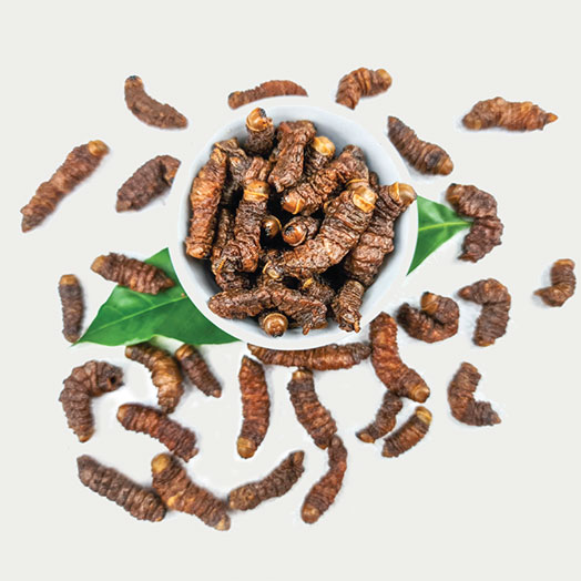 Fried Mopane Worms