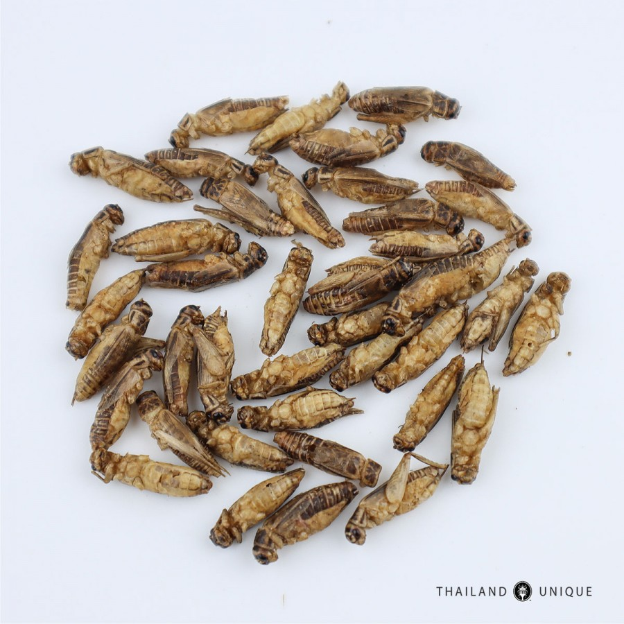 Wholesale Acheta Domesticus Crickets