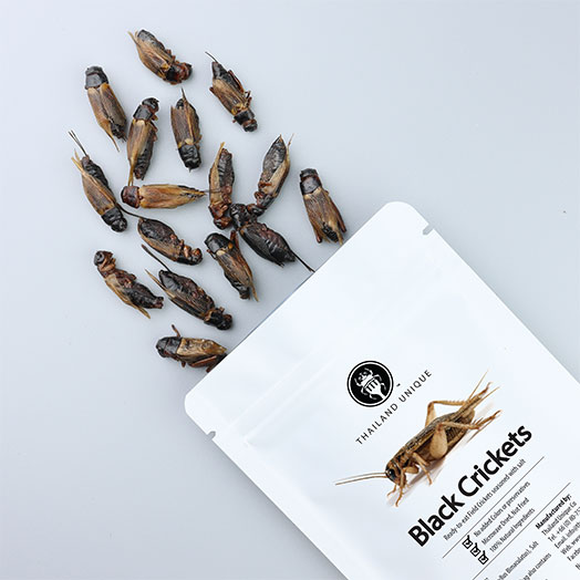 Edible Black Crickets - Gryllus Bimaculatus