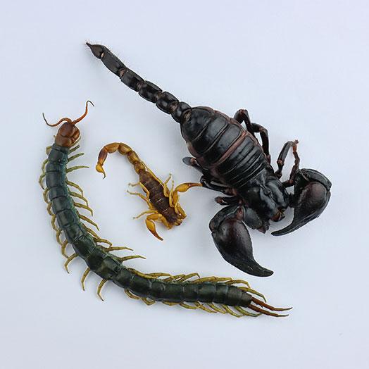 Edible Venomous Arachnids