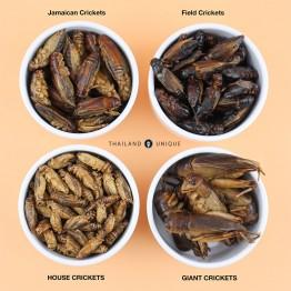 Edible Giant Crickets