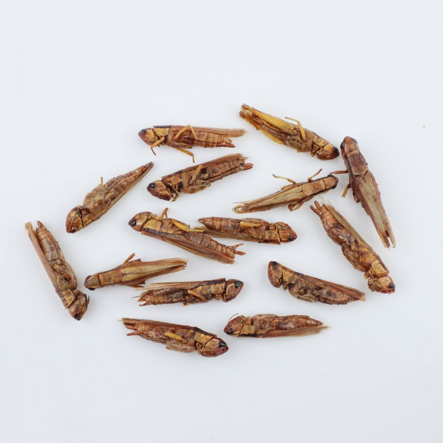 Wholesale Grasshoppers 500g