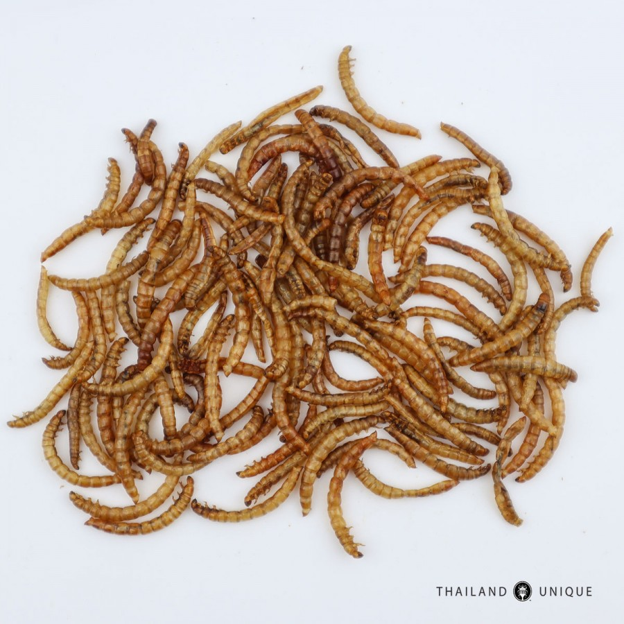 Wholesale Mealworms