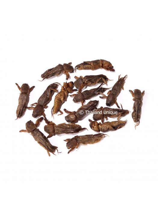 Dehydrated Mole Crickets 500g