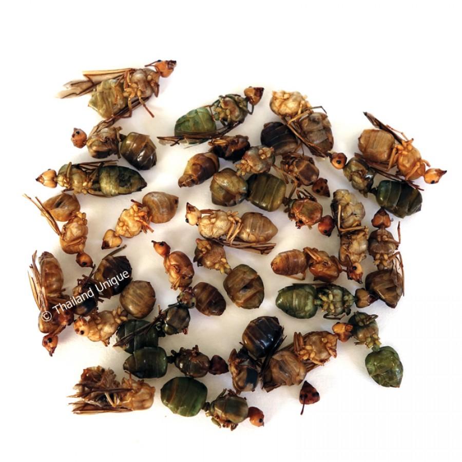 Dehydrated Queen Weaver Ants 500g