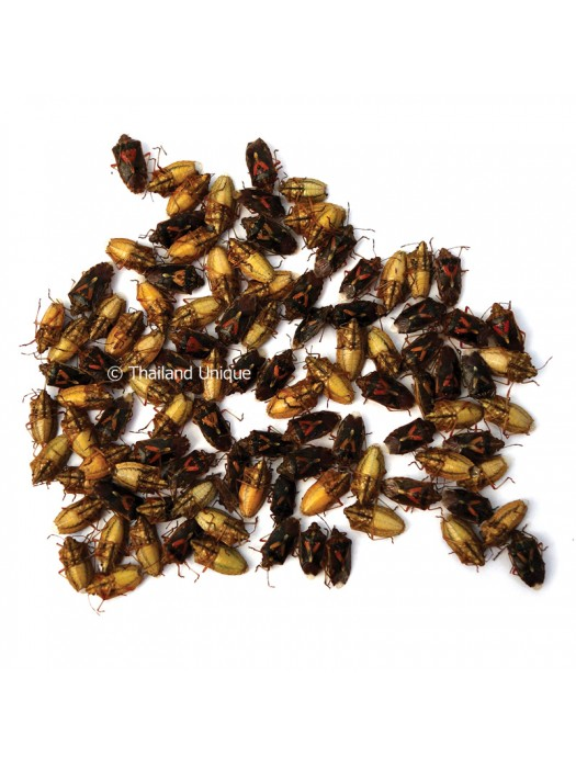 500g Dehydrated Shield Bugs