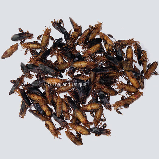 Squash Bugs Wholesale