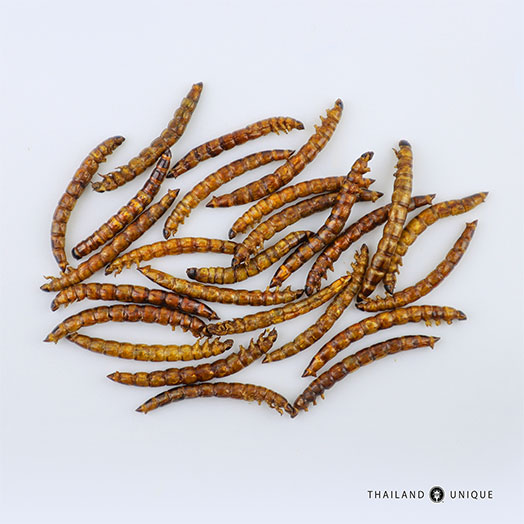 Bulk Superworms - Zophobas Morio