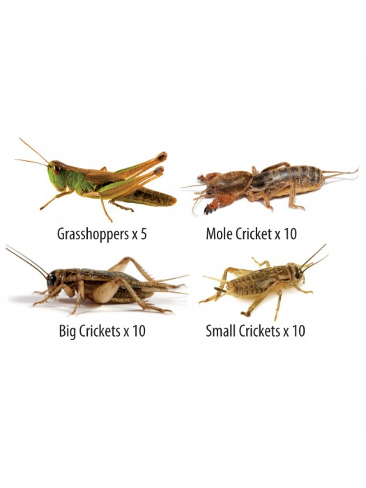Special Orthoptera Mix