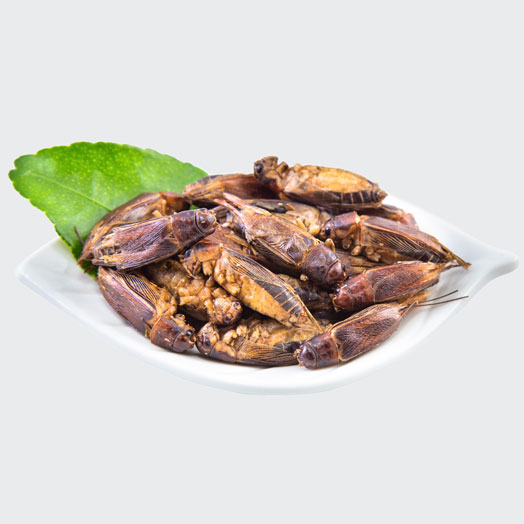 Dehydrated Jamaican Crickets 500g