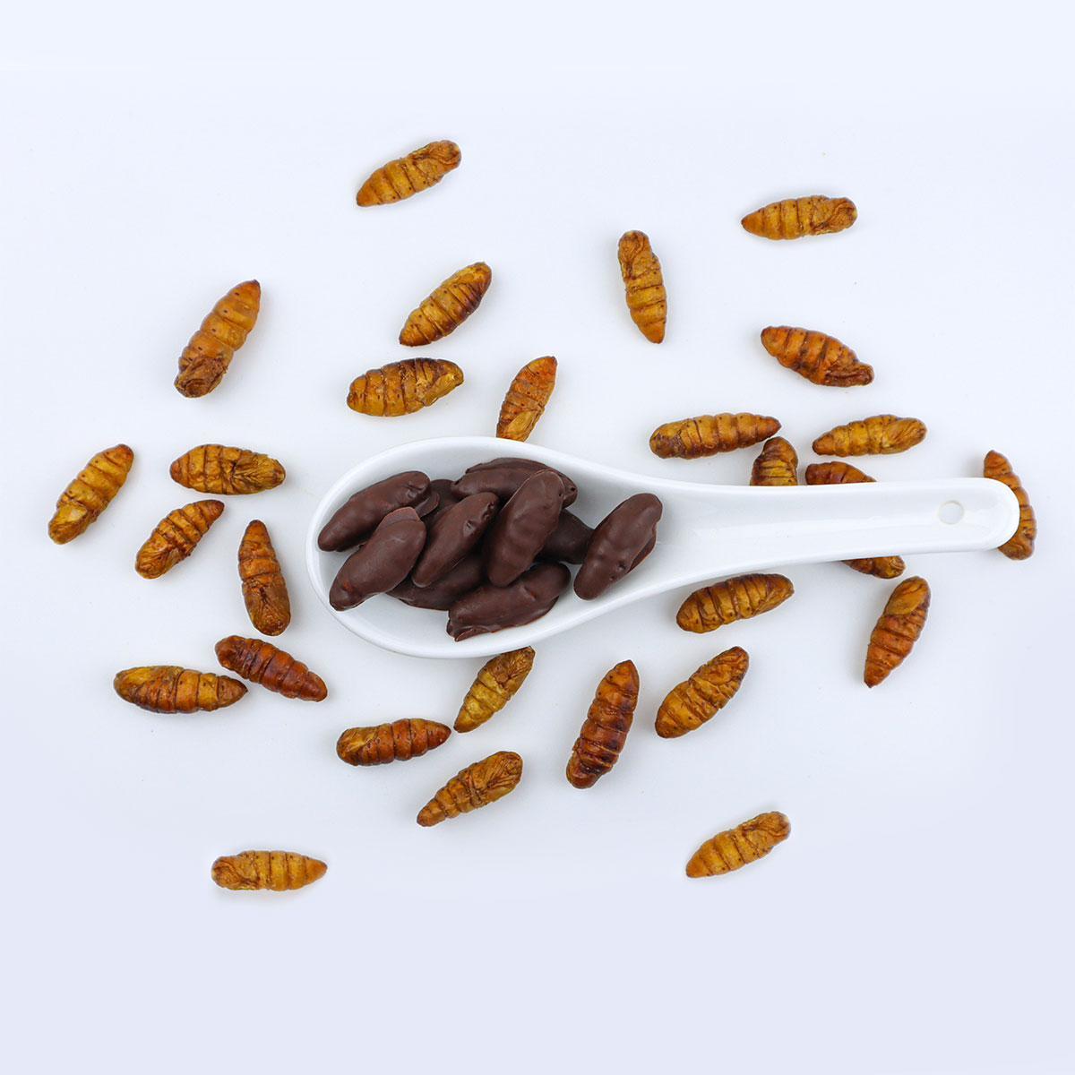 chocolate covered silkworm pupae